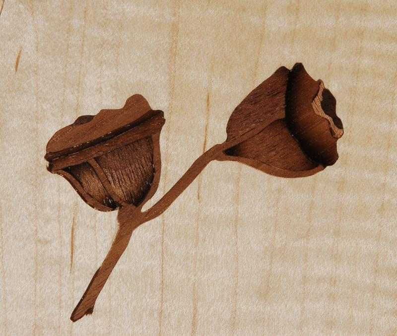 Maple Seed Pod